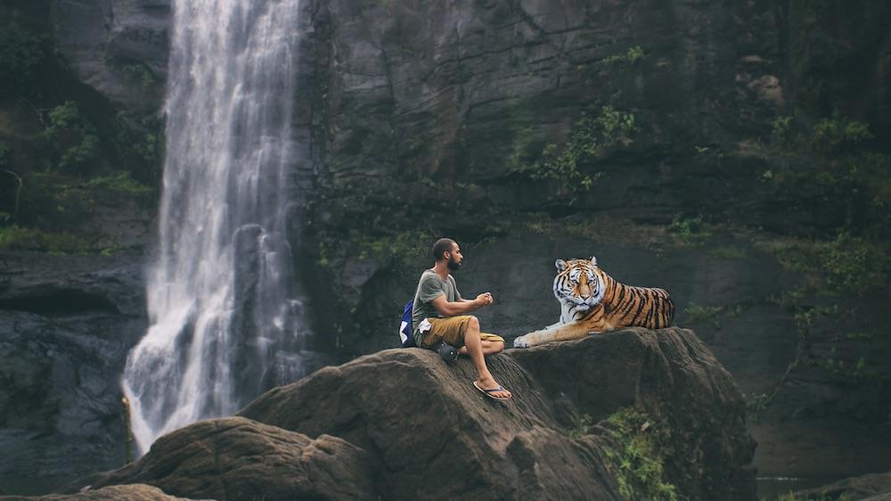 tiger-lyrics.jpg